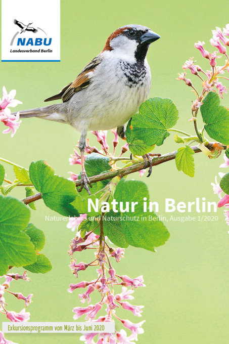 Natur in Berlin 1/2020