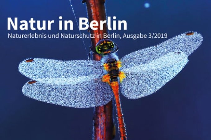 Natur in Berlin 3/2019 Titel klein