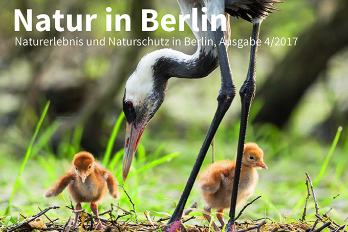 Natur in Berlin 4/17