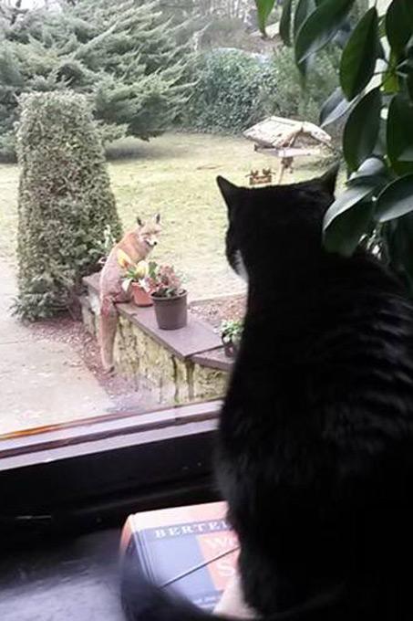 Merveilleux Fuchs Im Garten   Foto: Rosel Schmidt
